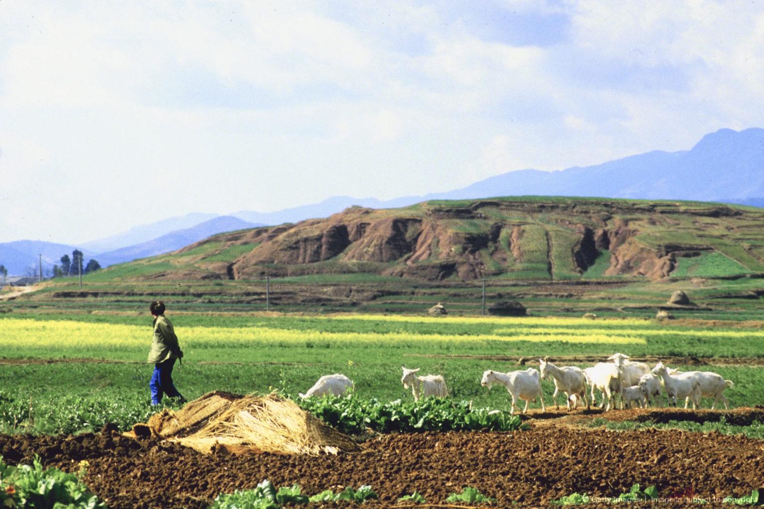 Фото пастуха в горах 6