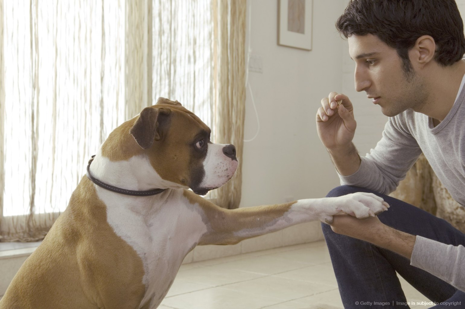 Dog putting paw on man?s hand